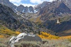 Eastern Sierra landscape with hawk Stock Photo