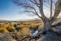 Eastern Sierra near Mono Lake royalty free stock photo