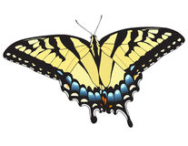 Eastern Tiger Swallowtail Stock Photo