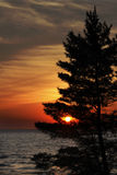 Eastern White Pine on Shore of Lake Huron at Sunset Royalty Free Stock Photos