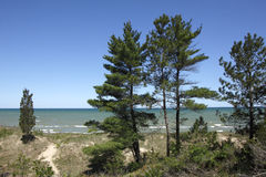 Eastern White Pines on Sand Dune Ridge Royalty Free Stock Images