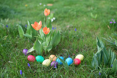 Eastwer eggs in a garden Royalty Free Stock Images