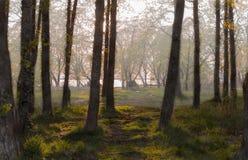 Easy autumn fog. On the solar coast of the lake among trees Stock Photos