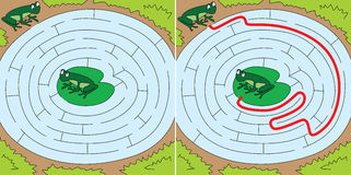 Easy frogs maze. For younger kids with a solution Stock Image