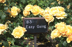 Easy going. Rose garden in Regent's Park, London UK Stock Photos