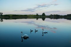 Lake with swans reeds forest and bridge at calm eavening summer day. Easy lazy vacation eavening with brigkt sy and lake water royalty free stock photos