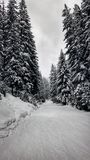 Easy Ski Slope In The Forest Royalty Free Stock Photos