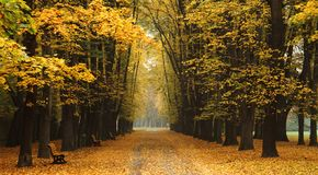 Easy way in the autumn park Royalty Free Stock Photos