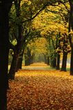 Easy way in the autumn park Stock Photography