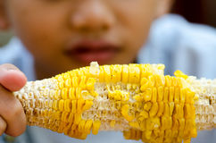 Eat corn Royalty Free Stock Photography