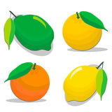 Eat fresh citruses. Royalty Free Stock Photos
