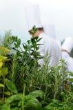 EAT HEALTHY fresh herbs Stock Photo
