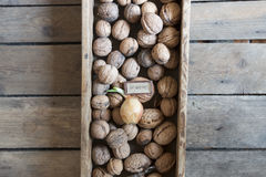 Eat Healthy text and fresh walnuts Royalty Free Stock Photo