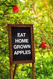 Eat home grown apples Royalty Free Stock Images