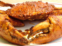 Eat Me. Crab with spicy sauce. The crab is from Irian (Indonesian Papua Royalty Free Stock Photos