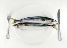 Eat more fish. Two mackerel on a white plate with knife and fork Royalty Free Stock Photos