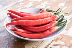 Eat Red pepper Capsicum Frutescens. Stock Photography