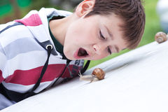 Eat snail Royalty Free Stock Photo