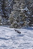 Eat Snow Brah. Snowboarder carving up the mountain until he caught an edge and did a faceplant Stock Photo