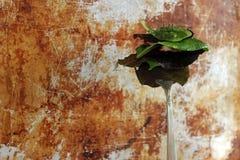 Eat your greens. Freshly washed salad greens on vintage fork against rustic metallic background Stock Image