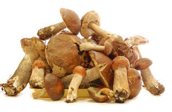 Eatable mushrooms Royalty Free Stock Photography