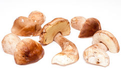 Eatable mushrooms Royalty Free Stock Photos