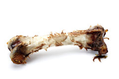 Eaten bone. Stock Image
