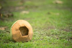 Eaten coconut with hole stock photography