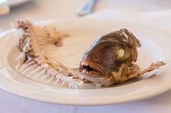 Eaten fish with head and tail - symbol of misery.  Royalty Free Stock Photos