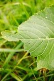 Eaten green leaf Royalty Free Stock Image