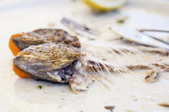 Eaten trout fish with head and bones, with cutlery Royalty Free Stock Image