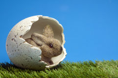 Eater bunny inside egg Royalty Free Stock Image