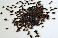 Free Eating Ants Stock Images - 73401234