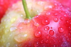Eating apple closeup. With selective focus on red skin and water droplets, and green stalk Stock Images