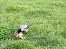 Eating birds Stock Photo