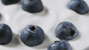 Eating blueberries with cream or yogurt by spoon, fruit background. stock video footage