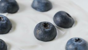 Eating blueberries with cream or yogurt by spoon, fruit background. stock footage