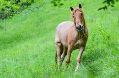 Eating brown horse Stock Photos