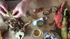 Eating bucket of fresh crabs stock video
