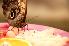 Eating butterfly Stock Photo