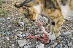 Eating cats cats eating the flesh. Eating cats, cats, eating the flesh...cute cats, big eyes cat pictures, great stray cats, cat eyes the most beautiful pictures Stock Photo