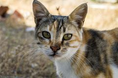 Big eyes cat pictures, great stray cats, cat eyes the most beautiful.listened cats, the most beautiful cat eyes, pet cat pictures,. Eating cats, cats, eating the stock photos