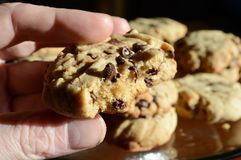Eating A Chocolate Chip Cookie Stock Photography
