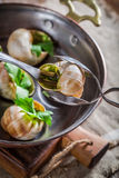 Eating cooking snails Royalty Free Stock Photography