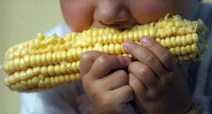 Eating corn Stock Photo