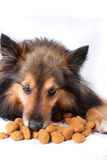 Eating dog Royalty Free Stock Image