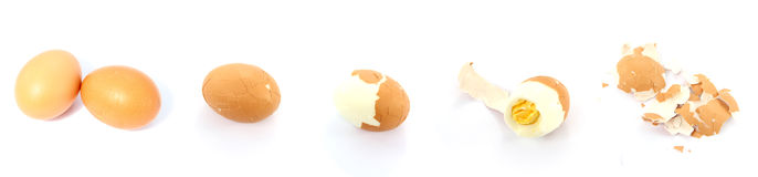 Eating an egg. Eating an chicken egg with white background Royalty Free Stock Photo