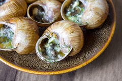 Eating the fried snails in garlic butter Stock Photo