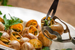 Eating the fried snails with garlic butter Royalty Free Stock Image