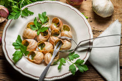 Eating the fried snails in garlic butter Stock Image